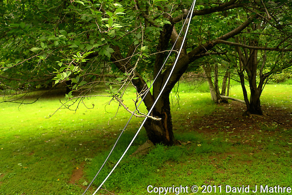 Downed Power Line. Hurricane Irene. Image taken with a Leica X1 camera. (David J Mathre)
