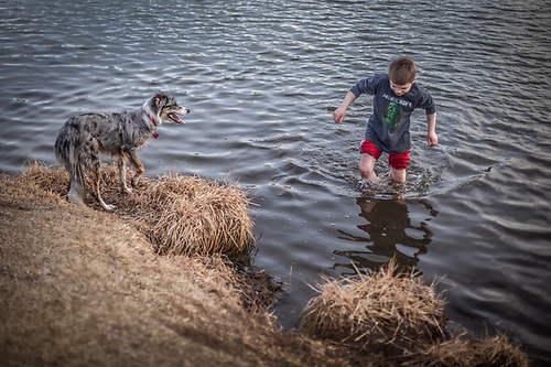 Molly watches as eight year old Cobyn Burt tests the water at Westchester Lagoon on a cool spring evening in Anchorage.  cburt@live.com  cburt@live.com (Charlie Burt, Dad) (© Clark James Mishler)
