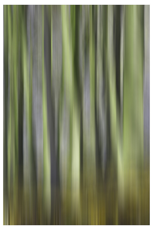 An abstract image of trees ©David Henderson ? All Rights Reserved.. (David Henderson)
