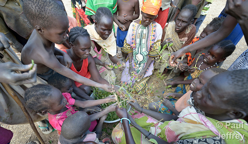 "Hungry people eat leaves of the lalob tree in a camp for internally displaced people in Manangui, South Sudan. The tree (Balanites aegyptiaca) is a common ""hunger food"" in the region. (Paul Jeffrey)"