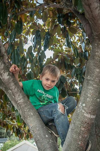 I found my six year old neighbor, Bradly, in a tree in his front yard. (Clark James Mishler)