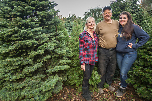 """I had considered having a 'Fire-Sale' sign made but I thought better of it.""   After losing his home, shop and business to the recent wild fires  many of Bud Pochini's Christmas trees, miraculously, survived the fire.  Bud's mother, Rianne, and daughter, Jasmine, assist Bud as they ready local and imported trees for their annual Christmas tree sale north of Calistoga. (Clark James Mishler)"