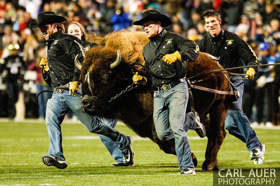 November 23rd, 2013:  Ralphie the Buffalo takes the field prior to the start of action in the NCAA Football game between the University of Southern California Trojans and the University of Colorado Buffaloes at Folsom Field in Boulder, Colorado (Carl Auer/ZUMAPRESS.com)
