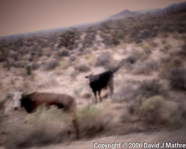 Dazed and confused after running out of water in the Nevada desert somewhere near Area 51. Image taken with a Nikon D200 camera and 18-70 mm kit lens. (David J Mathre)