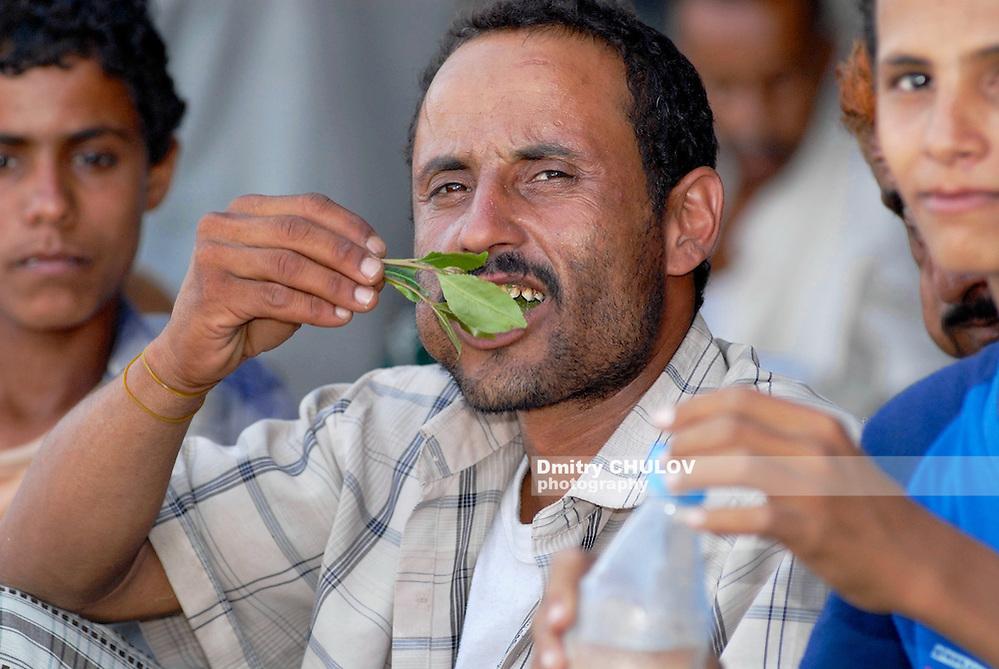 LAHIJ, YEMEN - SEPTEMBER 15, 2006: Man chews khat (Catha edulis) at the local market in Lahij, Yemen. Chewing khat (drug of abuse) is a major social problem in Yemen. (Dmitry Chulov)