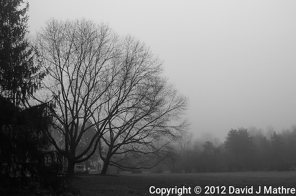 Foggy Morning. Late Fall in New Jersey. Image taken with a Leica X2 camera (ISO 800, 24 mm, f/5.6, 1/400 sec). Out of the camera B&W (high contrast) jpg image. (David J Mathre)