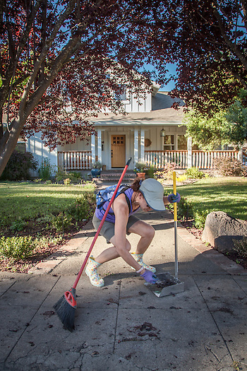 """Ruth Matera sweeps up plums that have fallen from the trees to the sidewalk in the front of her home in Calistoga """"I wish I had more time to make pies or jam from all these plums...what a mess."""" (Clark James Mishler)"""