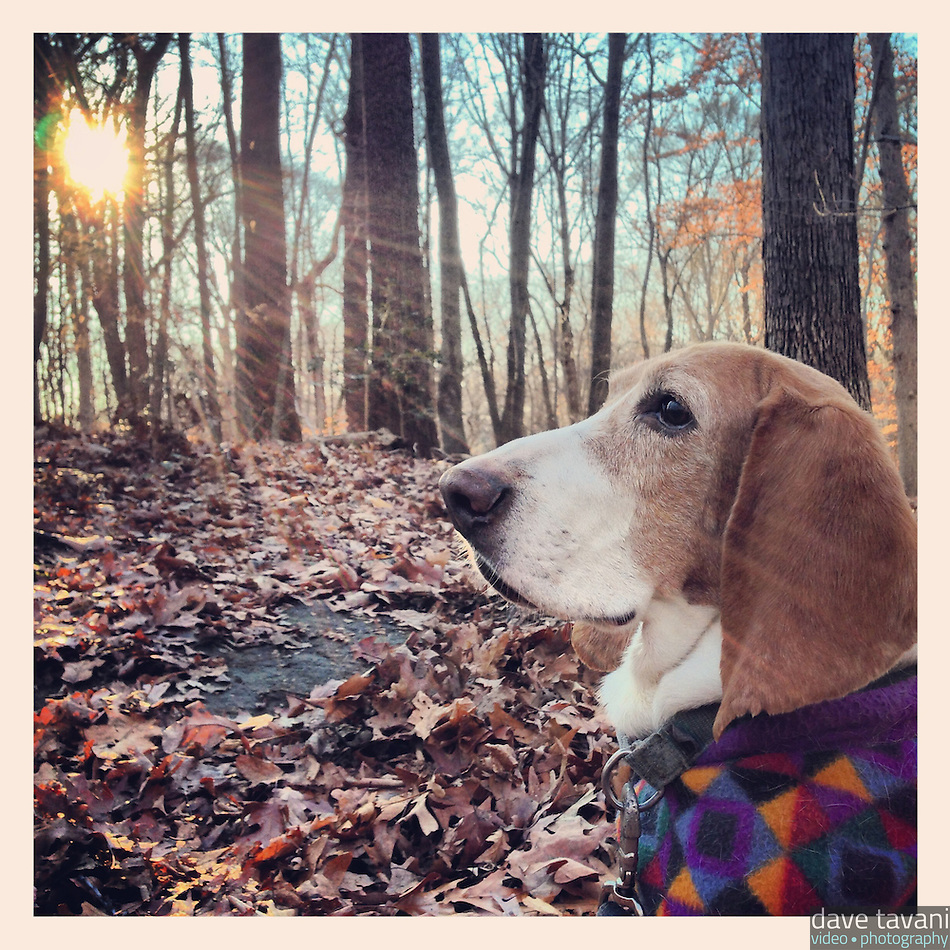 Elwood sits along the trail in Carpenter's Woods December 13, 2012. (Dave Tavani)