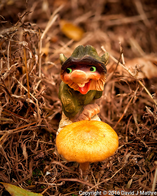 Backyard Nisse with a new autumn mushroom. Composite of 24 focus stacked images taken with a Nikon D810a camera and 60mm f/2.8 macro lens (ISO 200, 60 mm, f/3, 1/640 sec). Raw images processed with Capture One Pro, and the image stack processed with Helicon Focus. (David J Mathre)