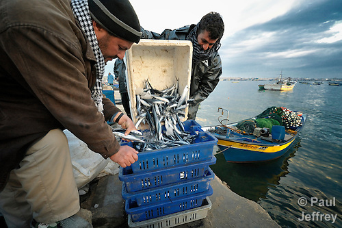 As a fish buyer watches closely, a fisher unloads his catch after a night of fishing off Gaza's coastline. Under the 1993 Oslo Peace Accords, the people of Gaza were allowed to fish out to 20 nautical miles from their coastline, yet since the Israeli military imposed a naval blockade in 2007 they have been limited to just three nautical miles. In practice, fishers who venture beyond two nautical miles are shot at by Israeli gunboats; several have been injured and some killed. Despite having 40 kilometers of coastline and a long tradition as fishers, many fishers are unemployed and the people of Gaza are forced to import fish from Israel. And what fishing they can do close to shore mostly involves the harvest of immature fish, which biologists warn has a negative impact on fish stocks in the region....