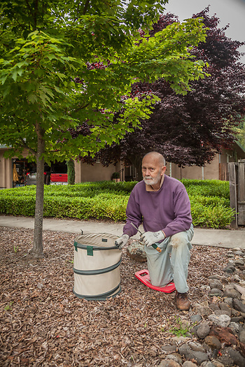 "Thirty year resident of Calistoga Chris Zinn pulls weeds in the front of his home on Myrtle Street.  ""Weeds...I try to get out here after every rain...it's a losing battle."" (Clark James Mishler)"