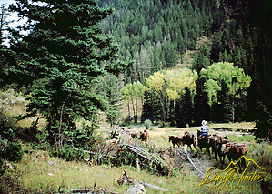 Cowboys, pack string, Bridger Teton National Forest, Jackson Hole, Wyoming (Daryl Hunter)