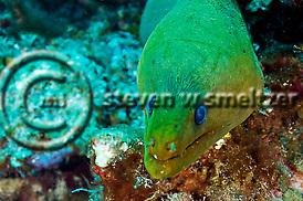 Leslie's Curl, Grand Cayman (StevenWSmeltzer.com)