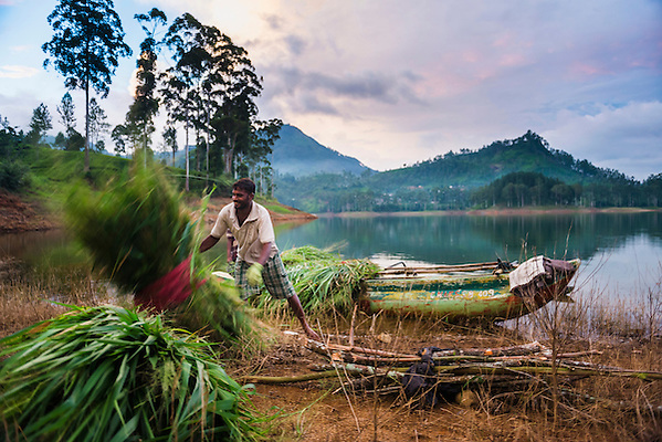 Photo of a farmer working in the Nuwara Eliya District, Sri Lanka Highlands, Sri Lanka, Asia.