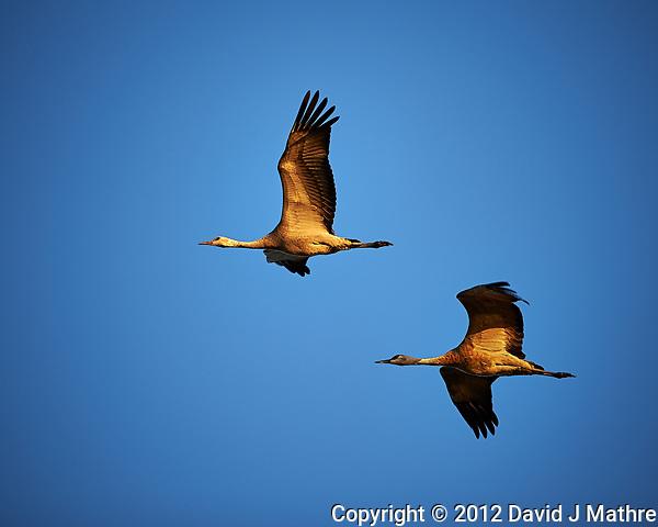Pair of Sandhill Cranes in Flight. Bitter Lake National Wildlife Refuge near Roswell. Image taken with a Nikon D4 and 300 mm f/2.8 VR lens (ISO 100, 300 mm, f/4, 1/800 sec). (David J Mathre)