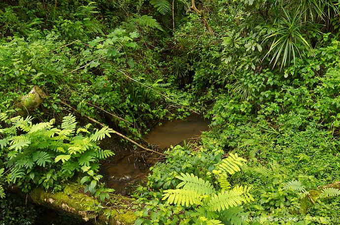 Opaeka'a Stream, Lihue-Koloa Forest Reserve, Kauai, Hawaii (Martin Beebee Photography)