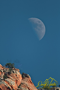 "Moon Over Zion National Park, Springdale, Utah (Daryl Hunter's ""The Hole Picture"" � Daryl L. Hunter has been photographing the Yellowstone Region since 1987, when he packed up his view camera, Pentex 6X7, and his 35mm�s and headed to Jackson Hole Wyoming. Besides selling photography Daryl also publ)"