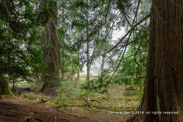 8.25.18 - Cedars.... (DAVID M SAX)