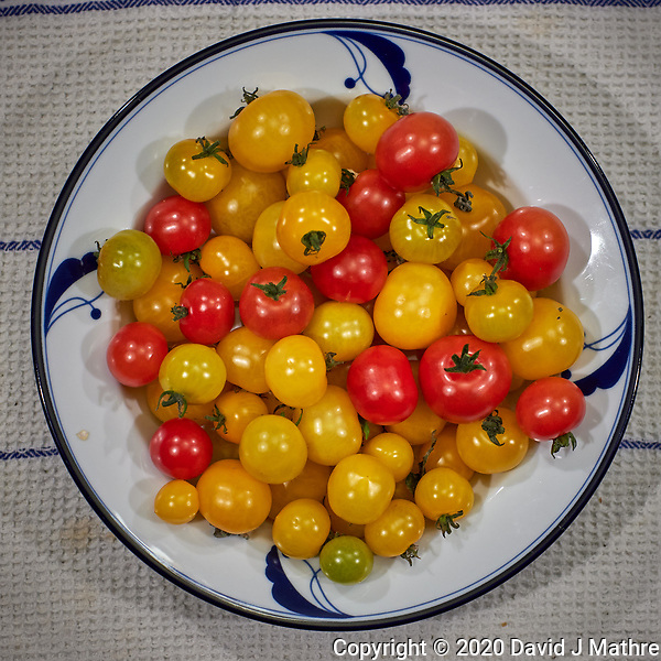 Yellow and Red Cherry Tomatoes grown in my indoor hydroponic farm. Image taken with a Leica CL camera and 60 mm f/2.8 lens (ISO 500, 60 mm, f/2.8, 1/125 sec) (DAVID J MATHRE)