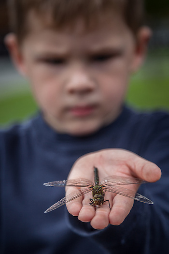 Four year old Noah with his first dragon fly in Anchorage Alaska (Clark James Mishler)