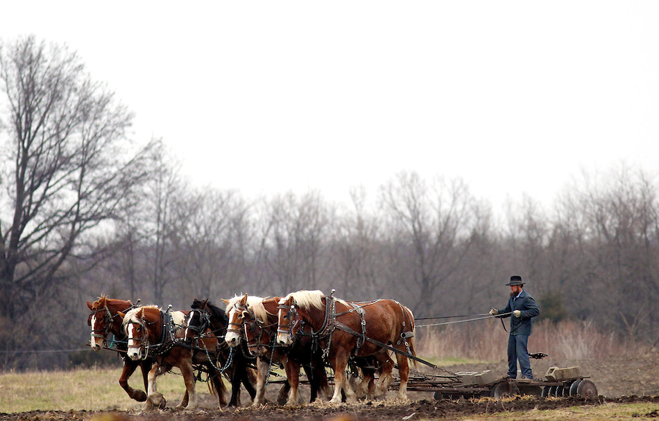 An Amish farmer rides a disc plow drawn by six horses west of Drakesville in southeast Iowa's Davis County.   It is among only a handful of rural Iowa counties in the 2010 Census to gain population (2.4 percent).  Much of that population growth is due to a steadily growing Amish population.  (Christopher Gannon/The Des Moines Register) (Christopher Gannon/The Register)