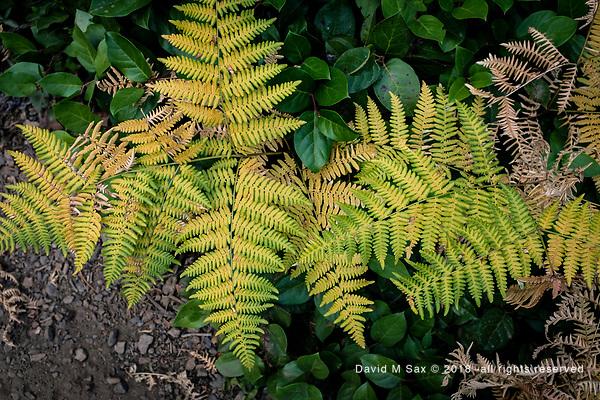 8.23.18 - Green Fringe... (DAVID M SAX)