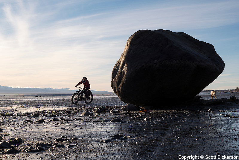 Carl Seger rides his fat tire bike on the beach at the edge of Kachemak Bay near Homer, Alaska during an unseasonably warm winter day. (Scott Dickerson)
