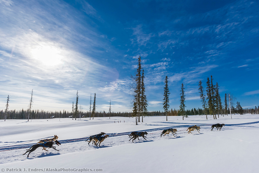 2007 Open North American Championship sled dog race (the world's premiere sled dog sprint race) is held annually in Fairbanks, Alaska. (Patrick J. Endres / AlaskaPhotoGraphics.com)