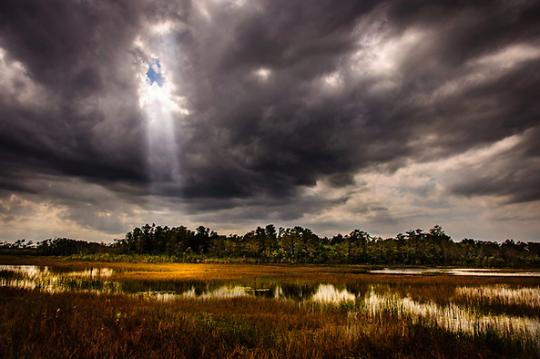 Grassy Waters Preserve 2011 Photo Contest Grand Prize Winner (Shane Srogi)