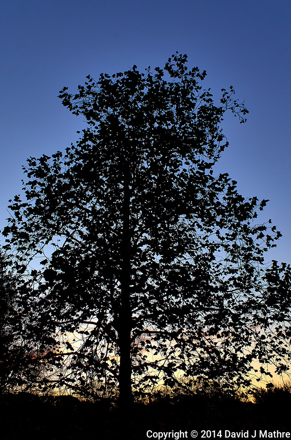 Tree silhouette at dawn. Image taken with a Leica T camera and 23 mm f/2 lens (ISO 100, 23 mm, f/5.7, 1/250 sec). (David J Mathre)