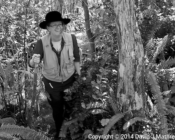 Just about out of the jungle. Swamp walk with Kristen and Angela in the Everglades behind Clyde Butcher's Big Cypress Gallery. Image taken with a Leica X2 camera (ISO 100, 24 mm, f/4, 1/60 sec). (David J Mathre)