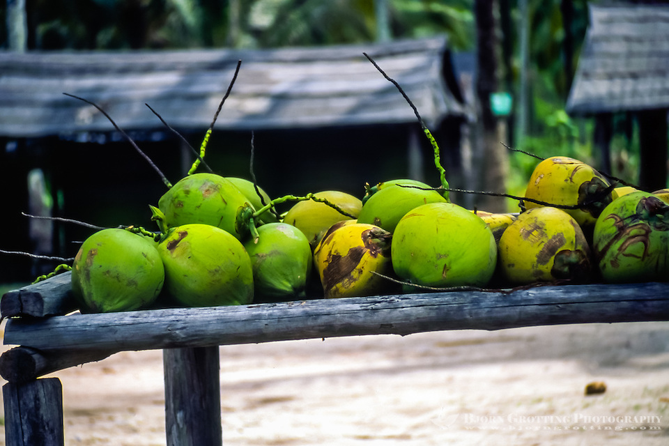Riau Islands, Bintan. Coconuts in a small village on Trikora beach, Bintan east coast. (Bjorn Grotting)