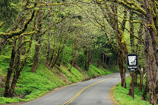 Historic Columbia River Highway 30 curves through forest, Oregon, USA (Brad Mitchell)