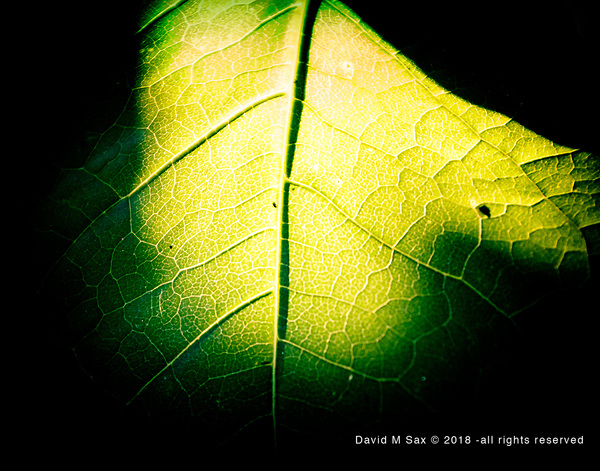 8.9.17 - Backlit.... (© David M Sax 2017 - all rights reserved)