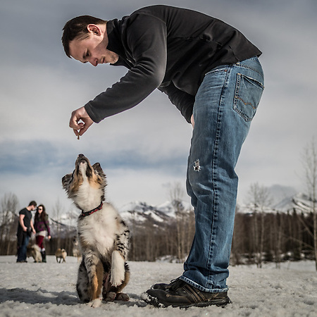 Alaska Magazine Account Executive Justin Phillips and his three month old Austrailian Sheppard, Jax, at University Dog Park, Anchorage  justin.phillips@morris.com (© Clark James Mishler)