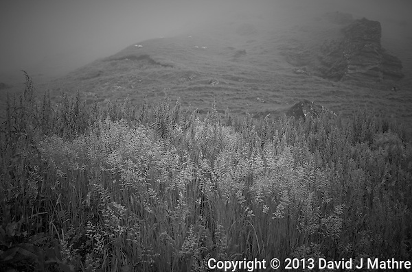 Misty Morning at the Drangshild Farm in Southern Iceland. Image taken with a Leica X2 camera (ISO 100, 24 mm, f/2.8, 1/60 sec). In camera B&W (David J Mathre)