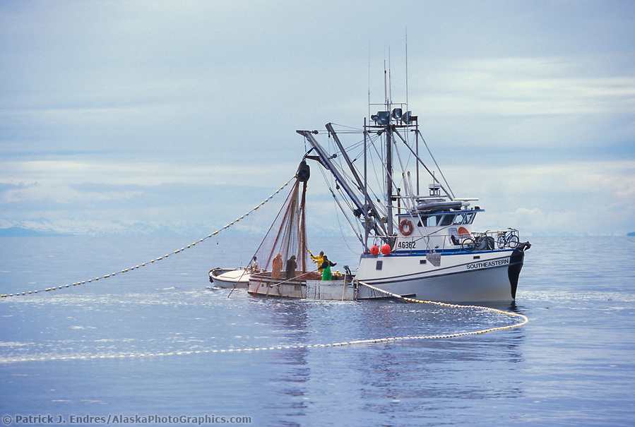 Commercial fishing photos: Purse seine drawn the net while commercial fishing for salmon in Prince William Sound, Alaska (Patrick J. Endres / AlaskaPhotoGraphics.com)