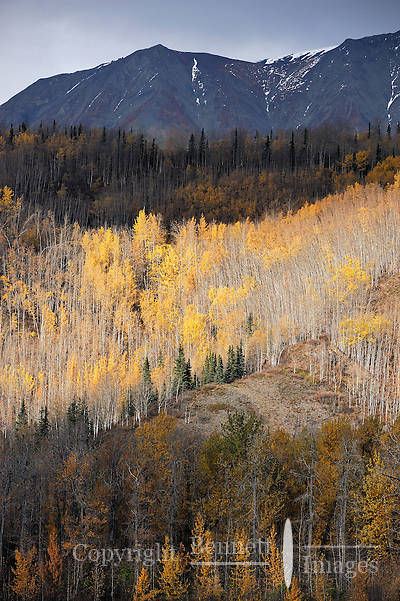 A few fall colors remain along the Matanuska River in Southcentral Alaska on a late fall day. (Edward Bennett)
