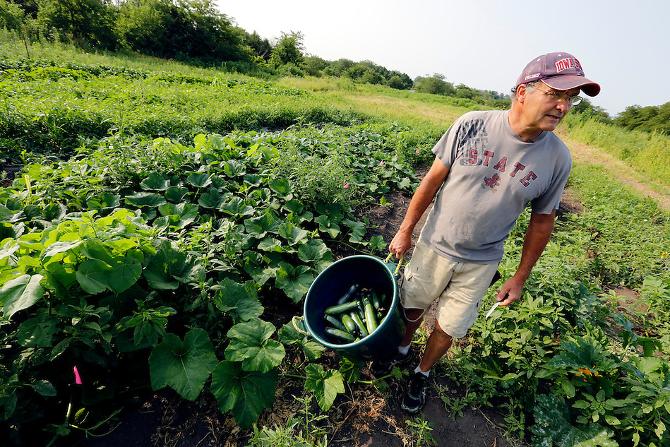 Denny Wimmer, 58, carries a bin of freshly-harvested zucchini on his organic farm in Arispe on July 31, 2014.   The farm has been in the Wimmer family since 1919.  Denny left his sales career in Chicago three years ago to return and launch an organic operation on the family's 76 acres of land. (Christopher Gannon/The Register)