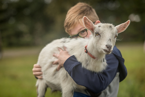 Nine year old Jackson Charton enters his Nigerian dwarf goat, Sylvie, at the Alaska State Fair in Palmer, Alaska (Clark James Mishler)