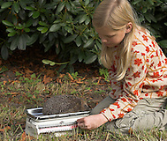 Kinder, Kind, Mädchen wiegen einen Igel im Herbst, Europäischer Igel, Westigel, Braunbrustigel, Erinaceus europaeus, Western hedgehog, Hérisson d`Europe de l`Ouest (Frank Hecker)