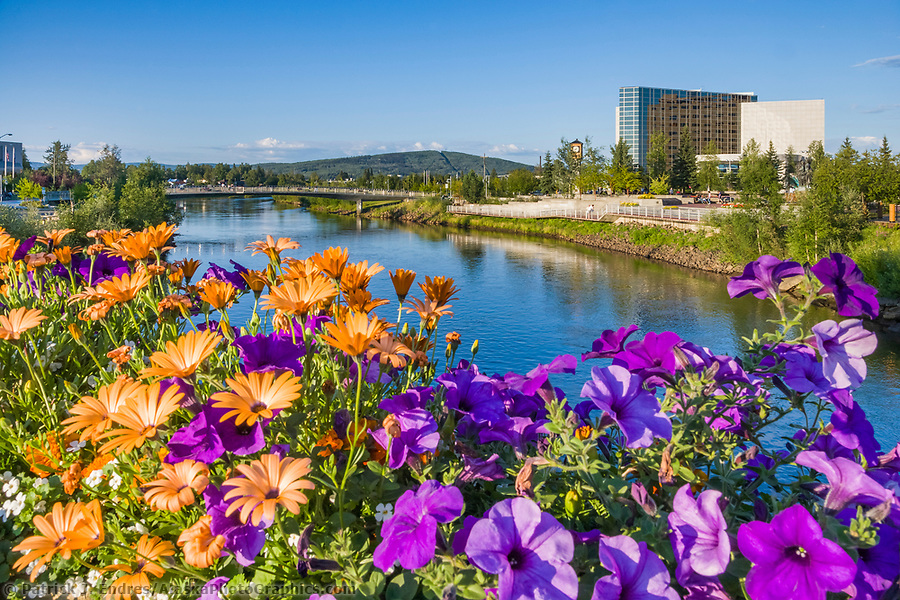 Flowers flourish under the endless daylight of Fairbanks summers, overlooking the Chena river, Rabinowitz courthouse and Golden Heart Plaza in downtown, Fairbanks, Alaska. (Patrick J. Endres / AlaskaPhotoGraphics.com)