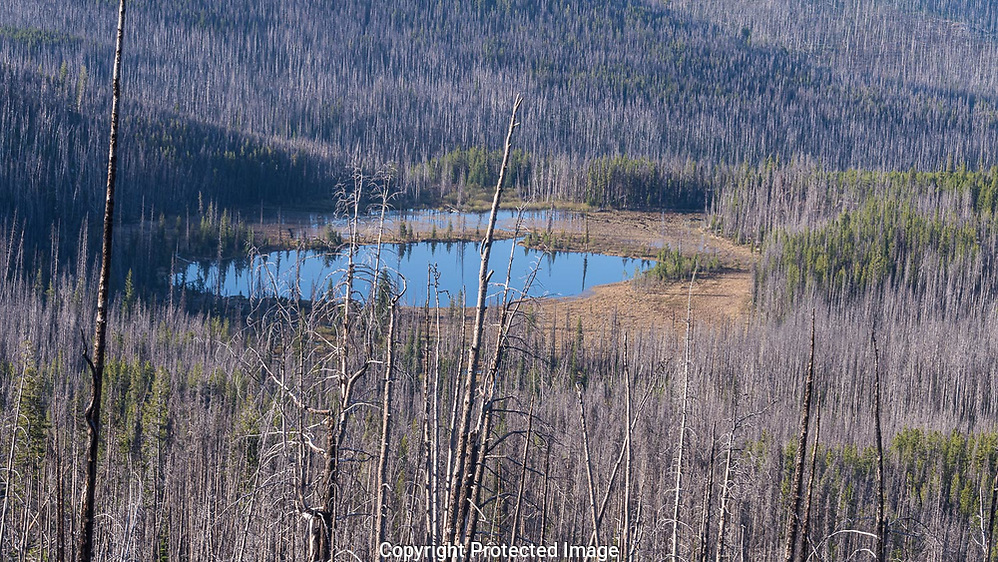 Roger Lake in the Okanogan National Forest. The area burned a decade ago and a new growth of pines, firs, and spruce are coming up throughout the forest. May 25th. (Thomas Bancroft)