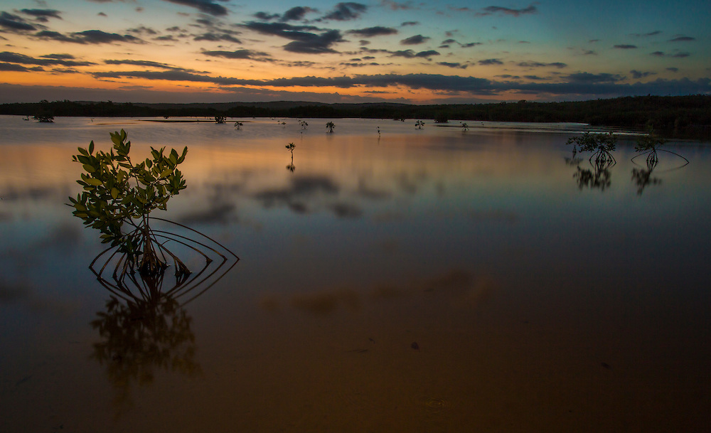 Mangrove trees in a lagoon at sunset in the Portland Bight Protected Area of Jamaica (Robin Moore)