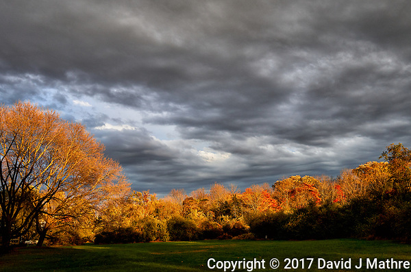 Late afternoon autumn colors. Backyard nature in New Jersey. Image taken with a Leica T camera and 18-55 mm zoom lens (ISO 100, 22 mm, f/4.5, 1/160 sec). (David J Mathre)