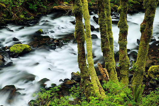 Bridal Veil Creek, Bridal Veil Falls State Park, Columbia River Gorge National Scenic Area, Oregon, USA (Brad Mitchell)