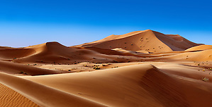 Sahara sand dunes of erg Chebbi, Morocco, Africa (Paul E Williams)