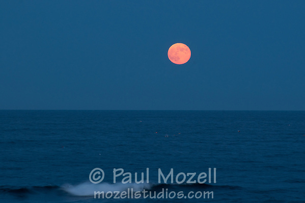 Lobster buoys and the full moon. Gloucester, Cape Ann, Massachusetts. (Paul Mozell)