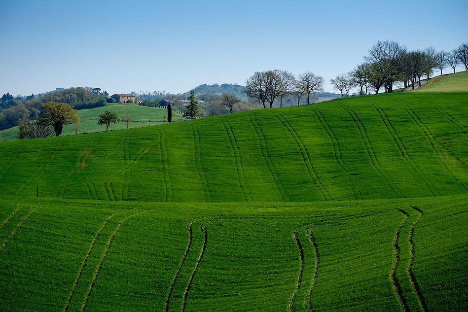 MONTALCINO, ITALY - CIRCA MAY 2015:  Landscape in the Tuscan region of Montalcino. in the Province of Siena (Daniel Korzeniewski)