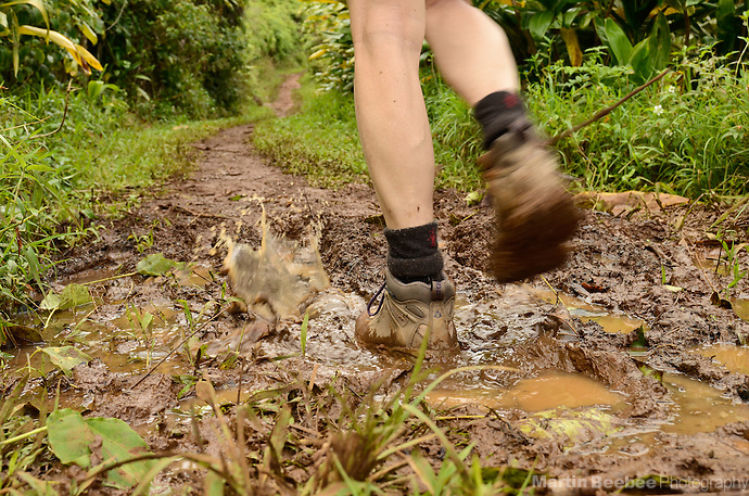 Walking along muddy Kuilau Ridge Trail, Lihue-Koloa Forest Reserve, Kauai, Hawaii (Martin Beebee Photography)
